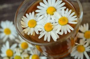 Chamomile flowers in a glass