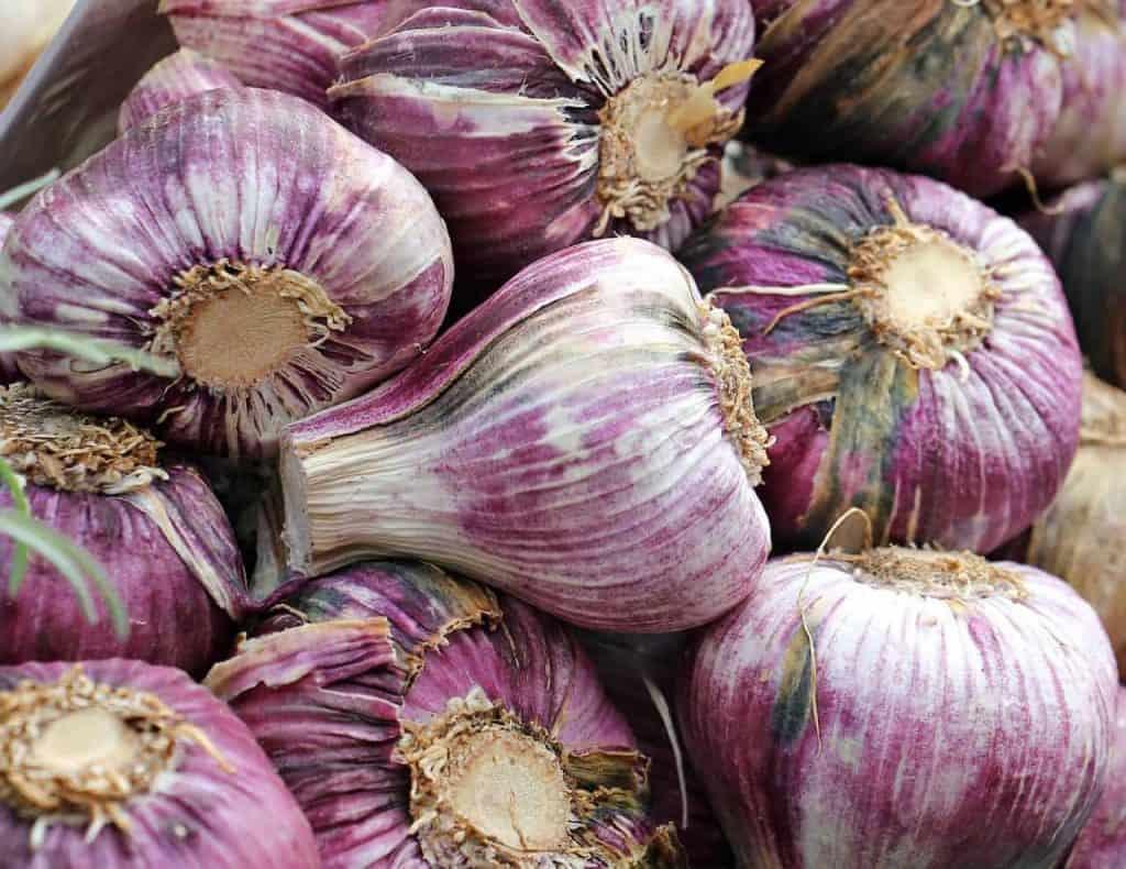 garlic 1422576 1280