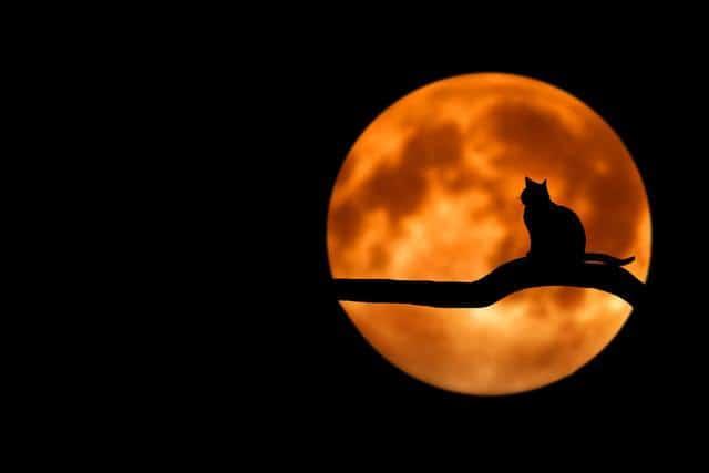 cat in the moonlight at night