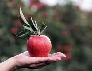 An apple lying on the palm of the hand