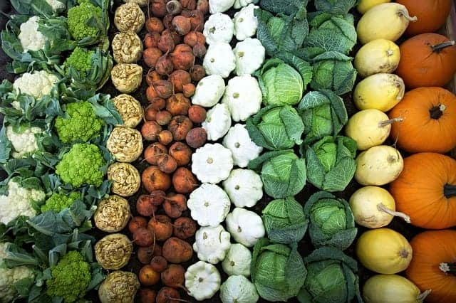 vegetables arranged in rows