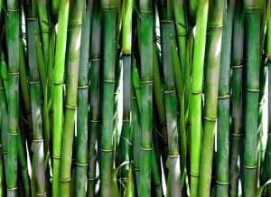 Thai bamboo shoots
