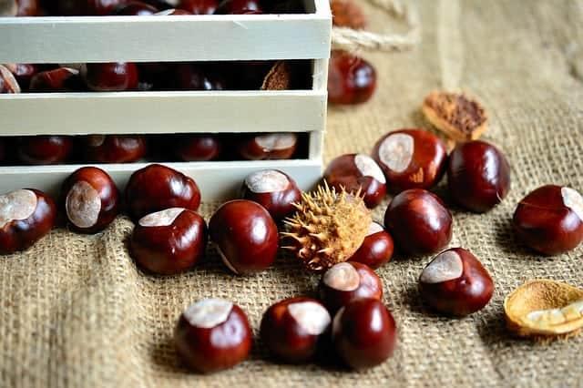 unshelled chestnut fruit