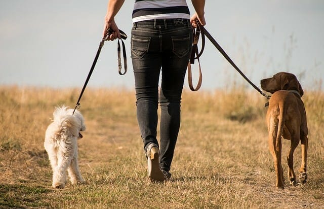 woman walks with dogs
