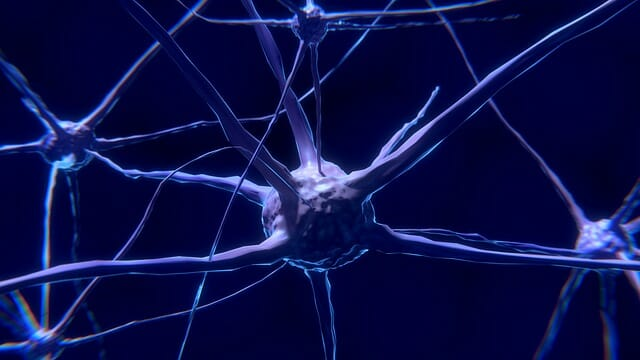 neuron, nerve cell