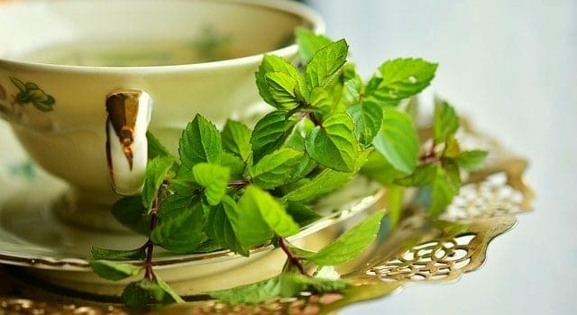 Herbal infusion in a cup