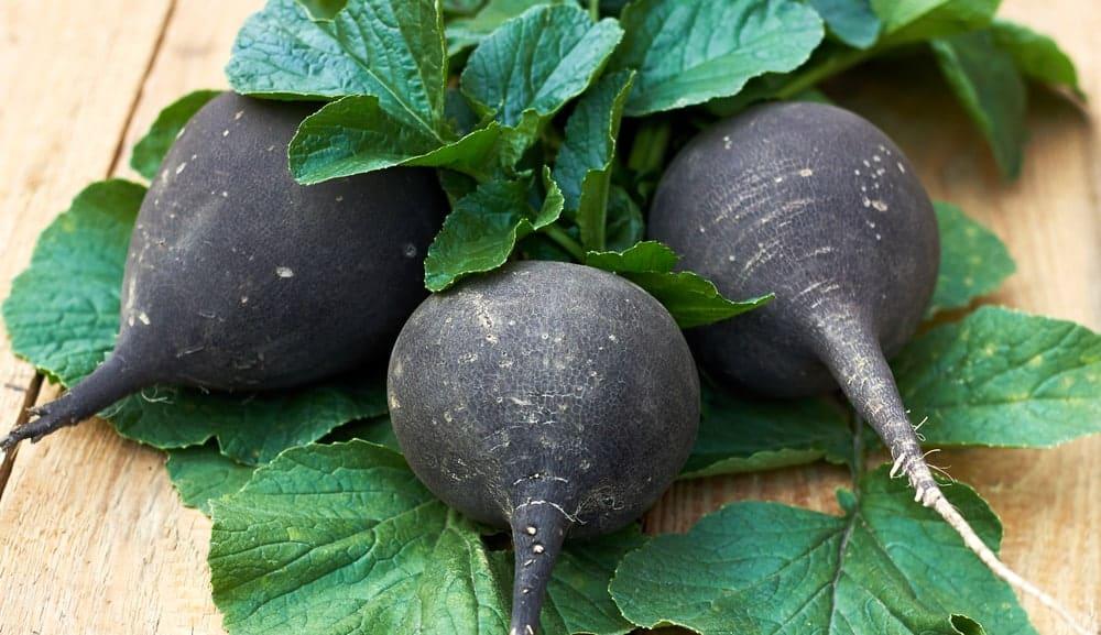 Three black turnips with leaves